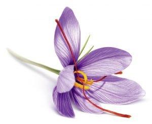 flor del azafran